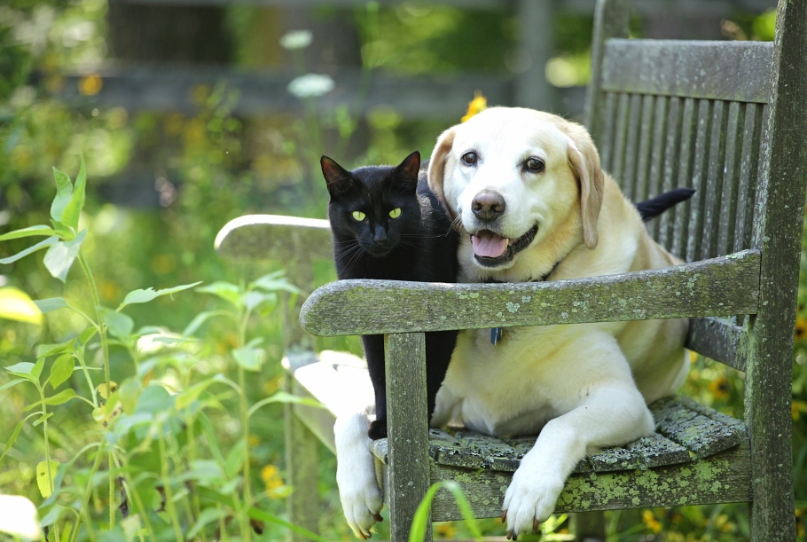 Cat and dog sitting on a chair in a garden