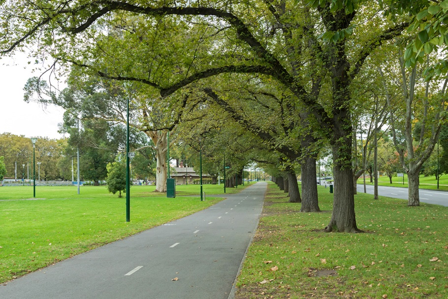 Trees along a footpath near a park